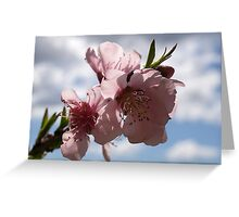 Spring is nearly here Greeting Card