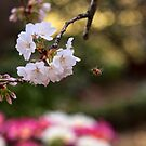 Blossom Bee by jayneeldred