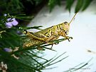 Grasshopper Perched on Pine Needles by Barberelli