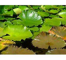Shining texture Photographic Print