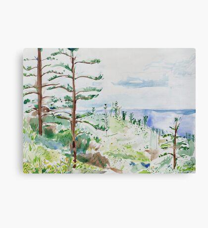Norfolk Pines, Bucks Point Canvas Print