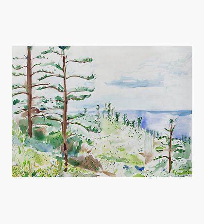 Norfolk Pines, Bucks Point Photographic Print