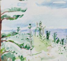 Norfolk Pines, Bucks Point Sticker