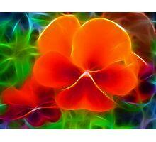 Orange-a-licious Photographic Print