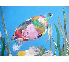 Sea Turtle Photographic Print