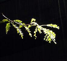 Illuminated Leaves by RandomLlama