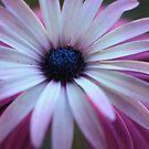 Daisy Double by chloemay