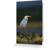Majestic Heron Greeting Card