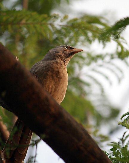 unknown bird by rickvohra
