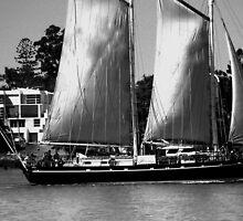 sail away by Zaca