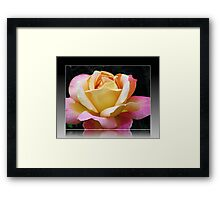 A Rose of Many Colours Framed Print