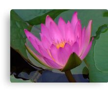 Water Lilies V Canvas Print