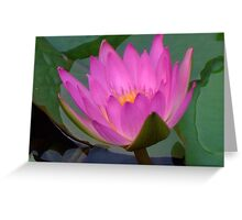 Water Lilies V Greeting Card