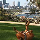 Wheels up in Kings Park by shazart