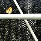 Butterfly and Metal, 3 by Kevin Miller