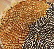 Partially De-Seeded Sunflower Head  by jojobob