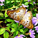 Colorful Butterfly, 3 by Kevin Miller