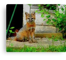 Gray Fox Kit Canvas Print