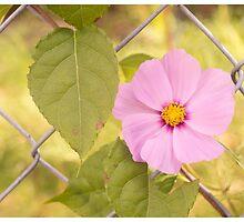 Purple Fence Flower by LizardSpirit