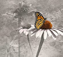 Monarch Butterfly on Cone Flower Selective Color by Diane Schuster