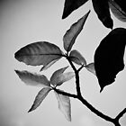 Leaf (B&W) by artz-one