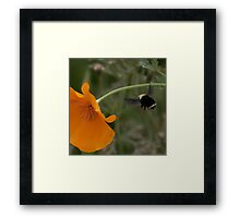 Bumble Bee #2 Framed Print