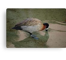 White-Faced Whistling Duck Canvas Print