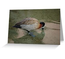 White-Faced Whistling Duck Greeting Card