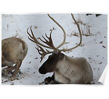 Now thats a rack!! Poster