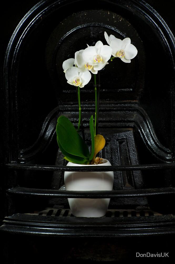 Orchidaceous  by DonDavisUK