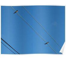 wire birds Poster