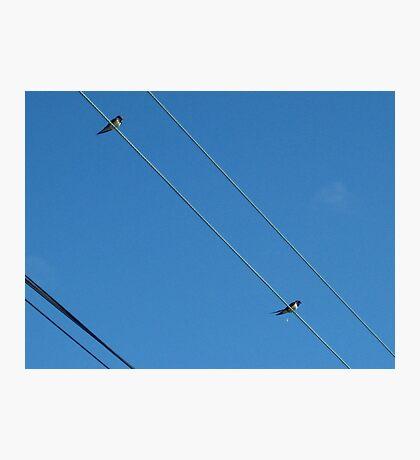 wire birds Photographic Print