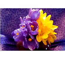 Still Life in Contrast ^ Photographic Print