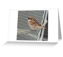 Sitting bird. Greeting Card