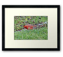 Hunting bird. Framed Print