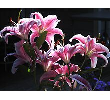 Stargazers, Backlit Photographic Print