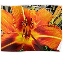 Day Lily For....AndreaEL Poster