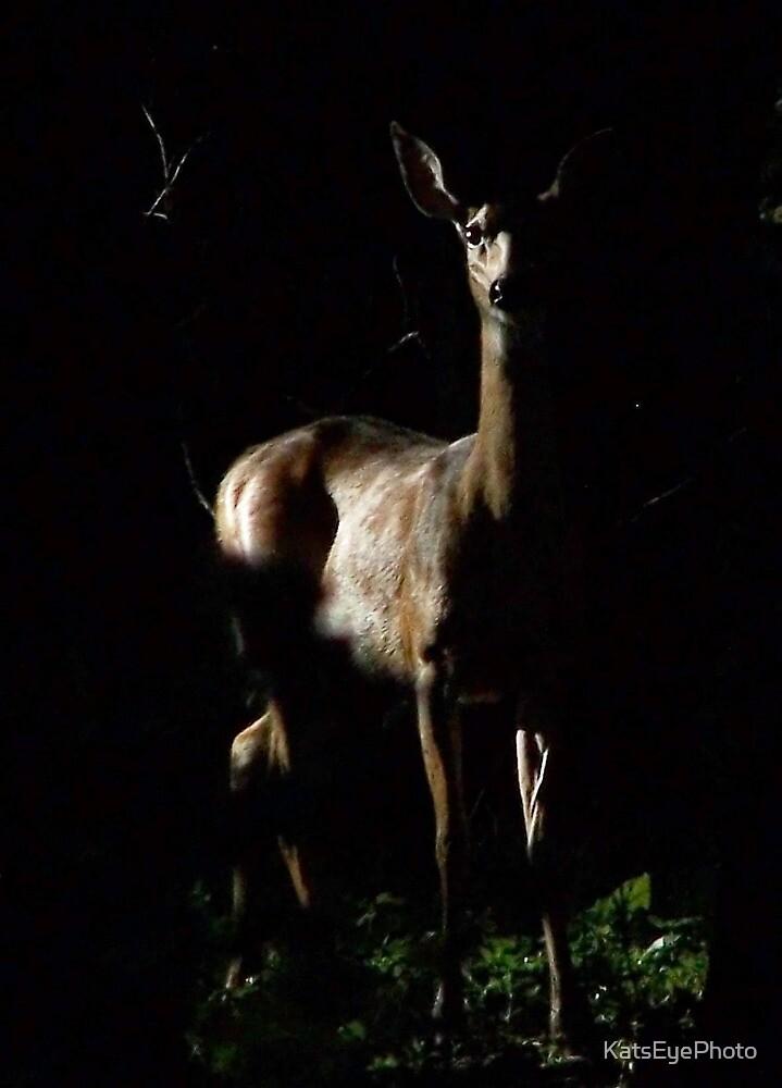 White-tail Deer by KatsEyePhoto