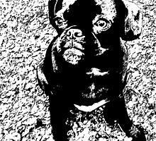 Black & White Pug by manpd