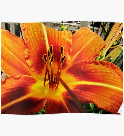 Day Lily For AndreaEL Poster