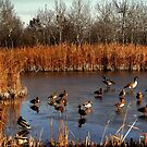 Found the Ice...Where's our Skates??? by Larry Trupp