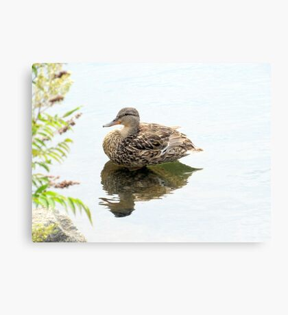Northern Reflections Canvas Print