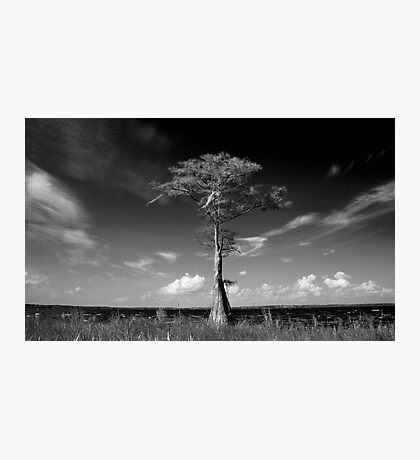 Lone Cypress Photographic Print