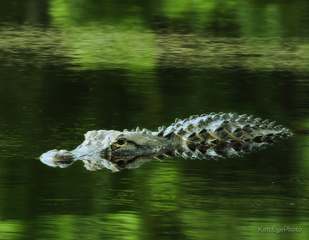 American Alligator by KatsEyePhoto