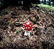 Mushroom2 by mirrorimage