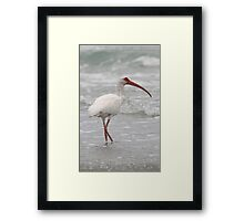 White Ibis Portrait  Framed Print