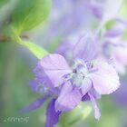 Summer purple by aMOONy