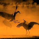 Dancing In The Mist by KatsEyePhoto