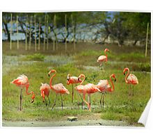 Flamingo's on Bonaire.... Poster