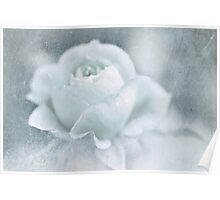 Cool Rose Poster